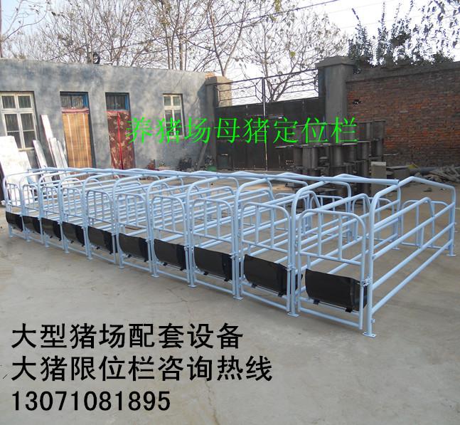 大型养猪场配套设备 大猪限位栏